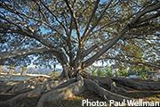 Resilient Santa Barbara County (CA)