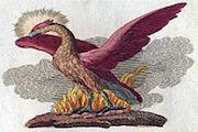 Phoenix Rising in Resilience (AZ)