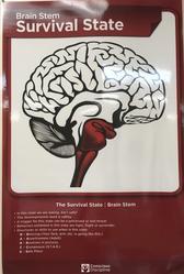 Survival brain