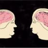 A New Understanding of the Childhood Brain [3 min - TheAtlantic.com]