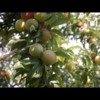 In Atlanta, This Group Fights Hunger With Tech and Found Fruit (3 minutes - NationSwell)